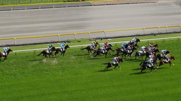 horse race, 馬, 東京競馬場, 午年